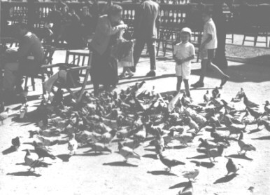 Woman and child feeding pigeons in Barcelona